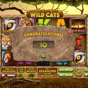 wild-cats_pop-up1