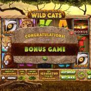 wild-cats_pop-up3