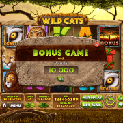 wild-cats_pop-up4