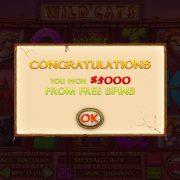 wild_cats_popup-2
