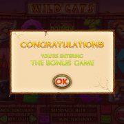 wild_cats_popup-3