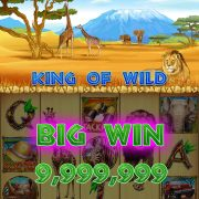 king_of_wild_win_bigwin